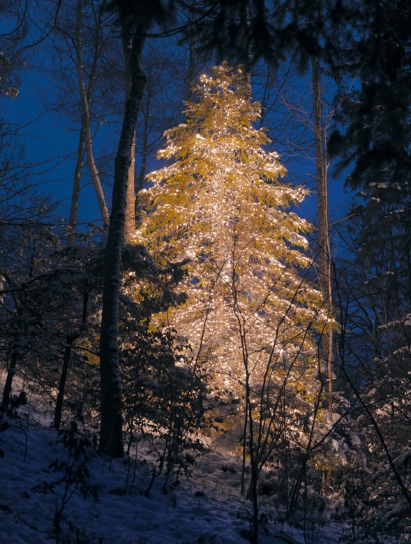 Illuminated tree by John Armleder, Stefan Altenburger