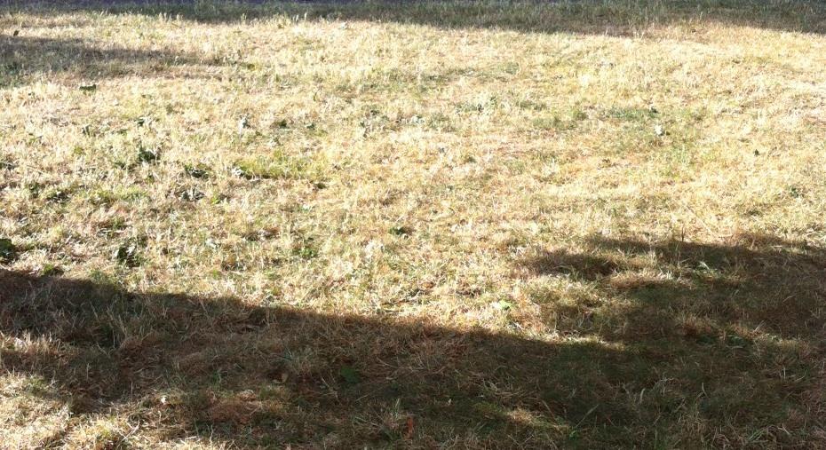 Dry grass Geneva